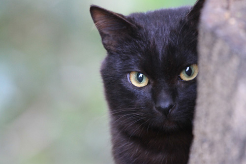 猫 見つめ て くる